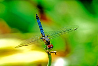 Dragonfly - 7